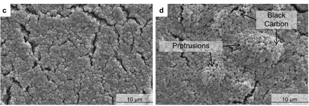 figure 2 s.aureus biofilm