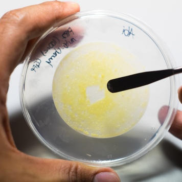 DSCF2776 - Biolistic Transformation 2